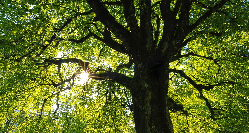 Copacul (PsihoArt)